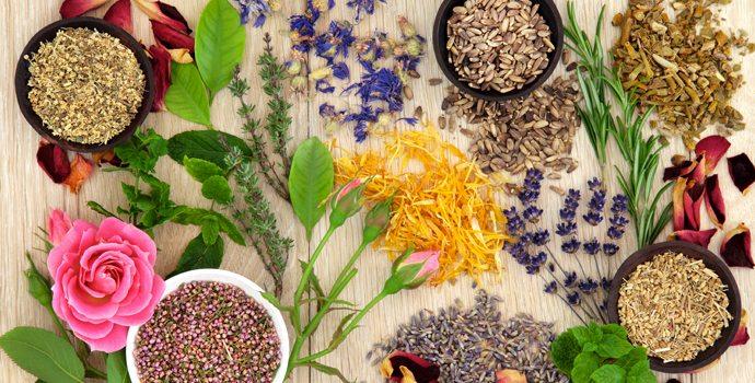"""Résultat de recherche d'images pour """"photos : pharmacologie, la guerre des plantes"""""""